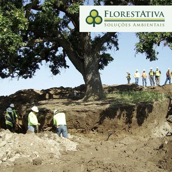 Autorização para corte de árvores