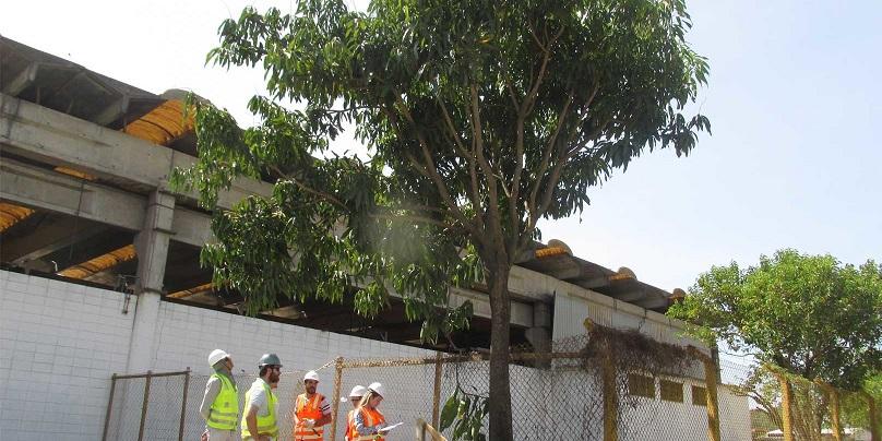 Remoção de árvores em terreno particular