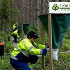 Investigação ambiental preliminar