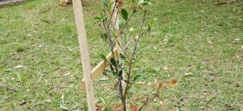 Empresa plantio de árvores